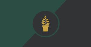 Craft & Communicate | Money plant