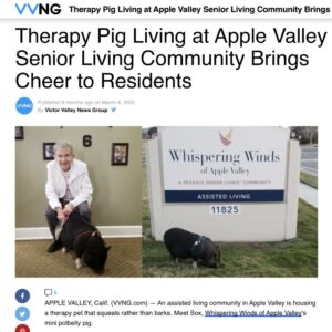 Craft & Communicate | Sox the Therapy Pig | News Story